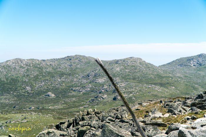 lone log Mt Kosciuszko Summer 2019