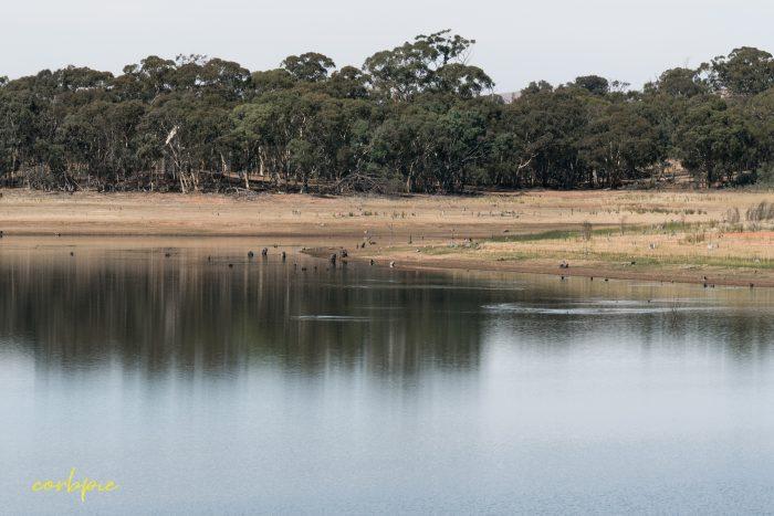 Tullaroop Reservoir 10 2019