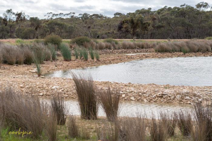 cockatoo hill reservoir 50mm 1