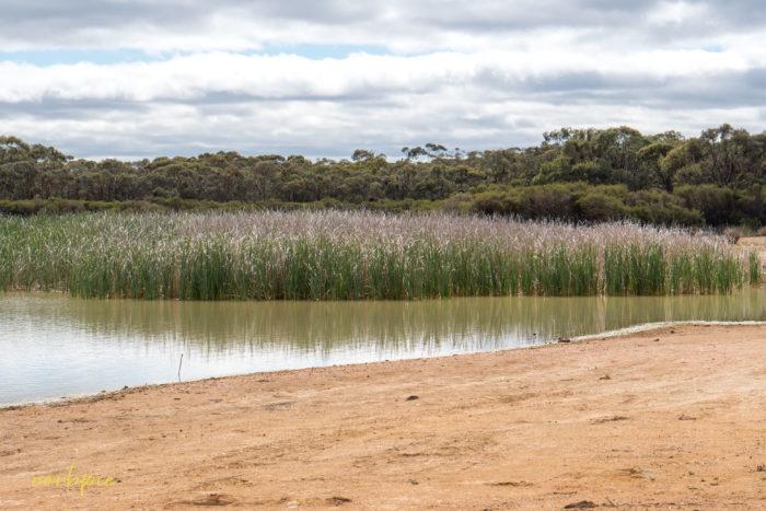 cockatoo hill reservoir 50mm 12