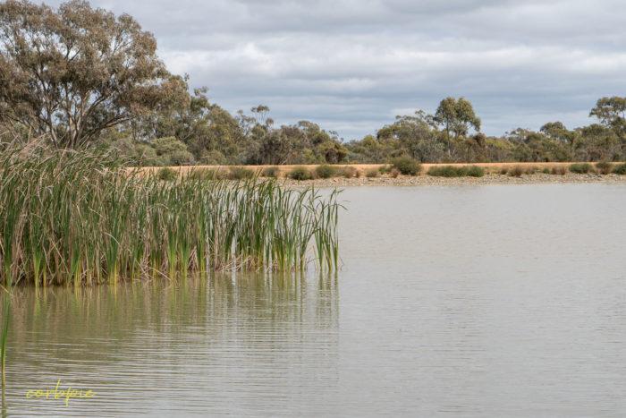 cockatoo hill reservoir 50mm 19