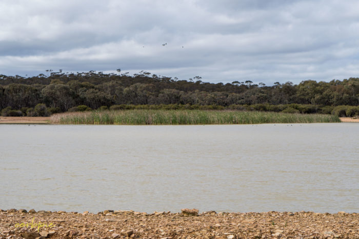 cockatoo hill reservoir 50mm 2