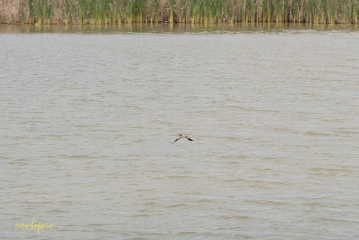 cockatoo hill reservoir 50mm 22