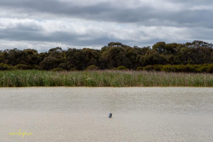 cockatoo hill reservoir 50mm 9