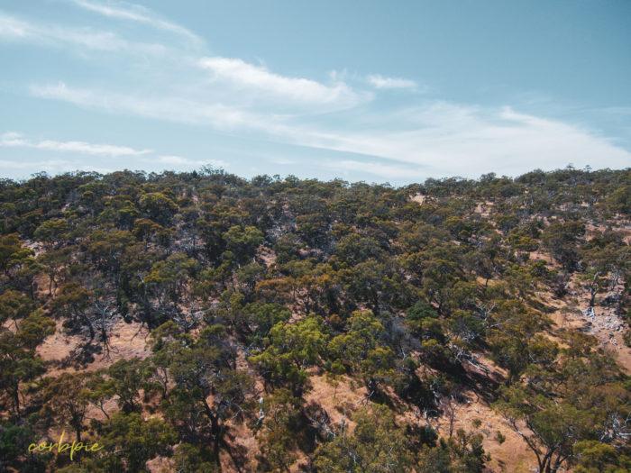 Mount Alexander drone 3