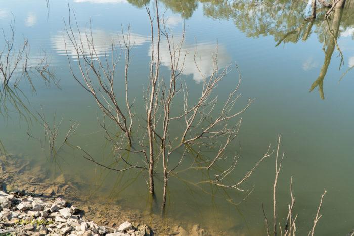 Lake Eppalock dropping levels 15
