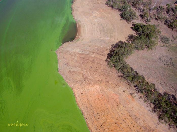 Lake Eppalock blue green algae 2