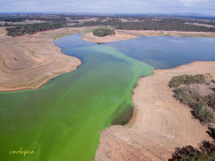 Lake Eppalock blue green algae 3