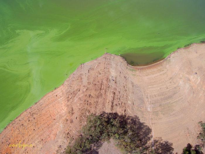 Lake Eppalock blue green algae 4