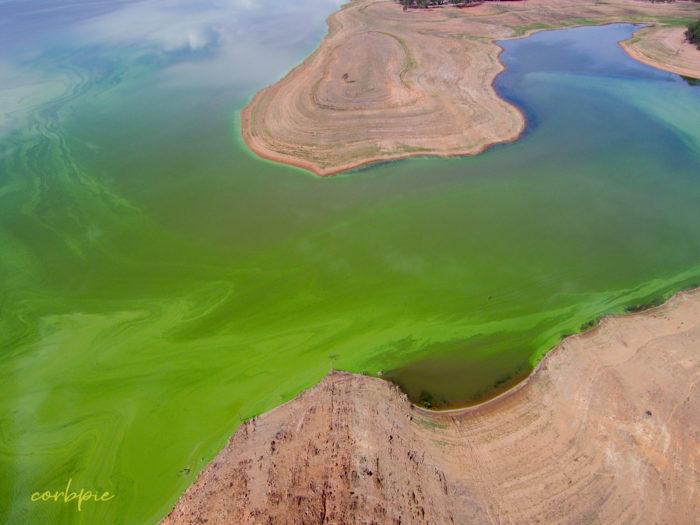 Lake Eppalock blue green algae 5