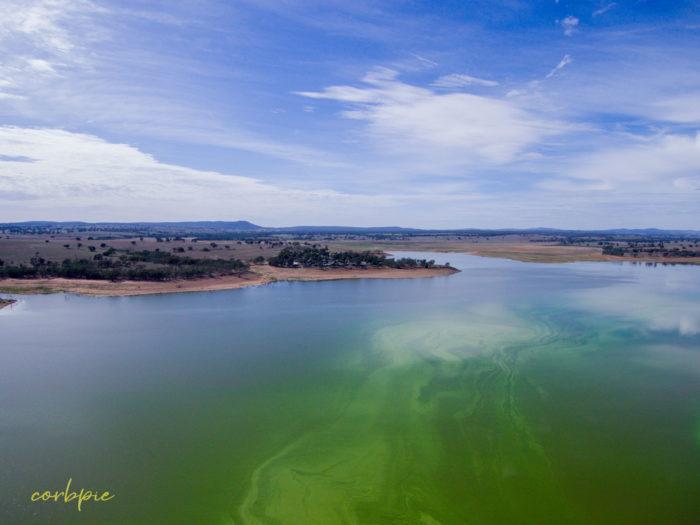 Lake Eppalock blue green algae 6