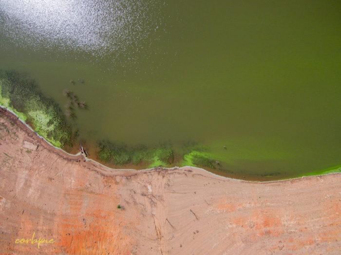 Lake Eppalock blue green algae 7