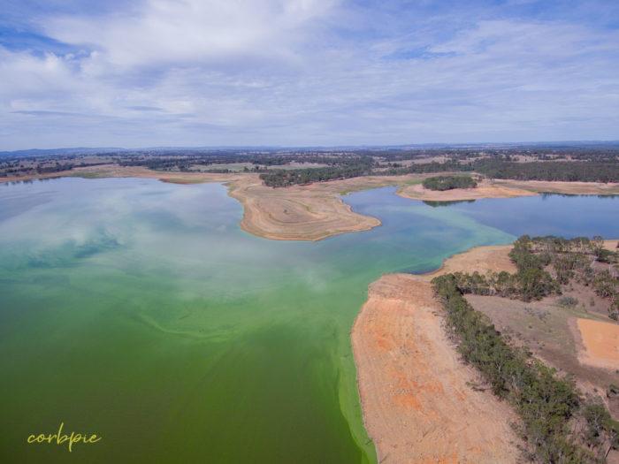 Lake Eppalock blue green algae 8