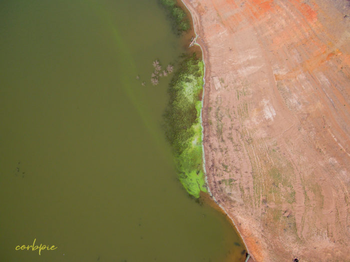 Lake Eppalock blue green algae 9
